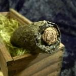mummified finger prop bone